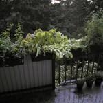 Regen und neue Töpfe