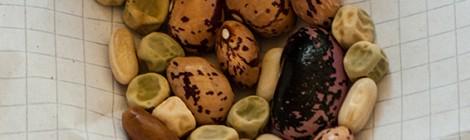 Bohnen- und Erbsensaat