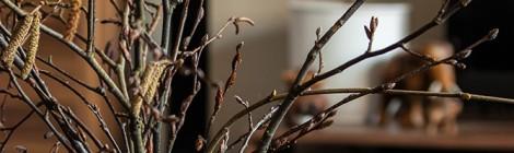 Frühlingszweige in der Wohnung
