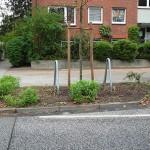 Experiment Baumscheibe: Ein kleiner eigener Garten in Hamburg