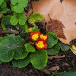 Herbstliche Blumenpracht im Straßenbeet