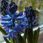 Blühender Frühling in der Wohnung und an der Straße