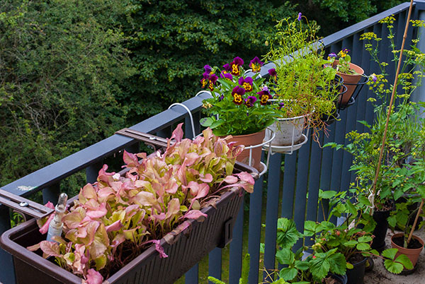 sommervorbereitung auf dem balkon und karlchens welt. Black Bedroom Furniture Sets. Home Design Ideas