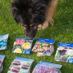Wunderbare Überraschungspost: Blumenzwiebeln für die Herbstpflanzung