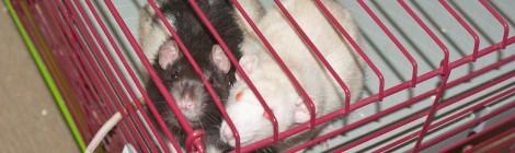 Pumba und Timon