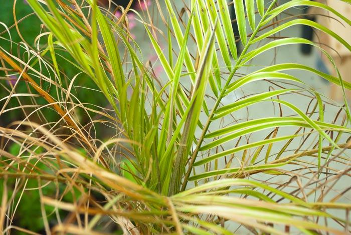 Palme auf dem Balkon