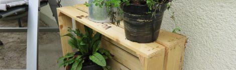 Unsere neuen Balkonpflanzen ziehen ein