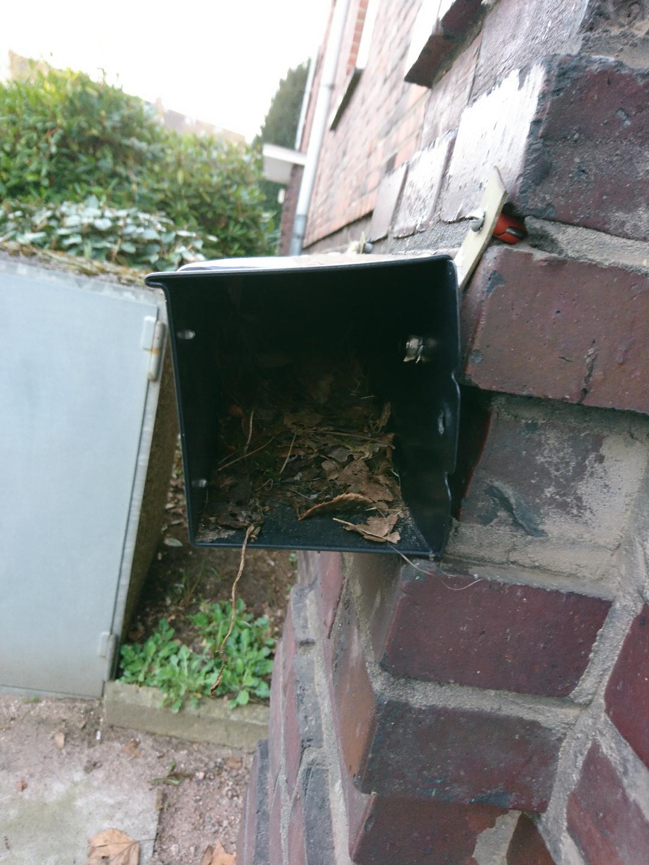 Vogelnest im Briefkasten von innen