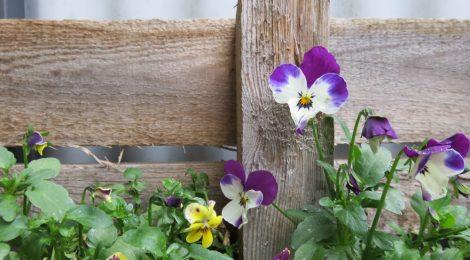 Unser Frühlingsbalkon