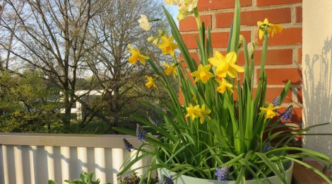 Frühlingsblüher als Etagenpflanzung