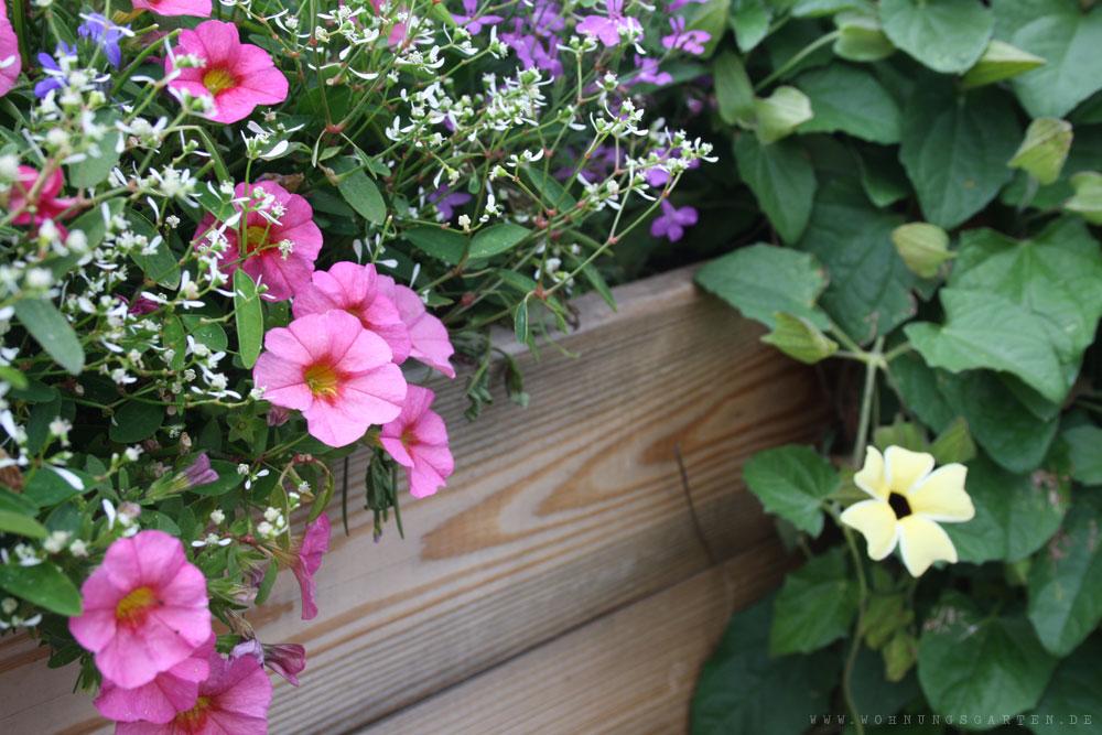 Blumen beim Garten-Blogger-Treffen