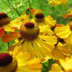 Bauerngarten im Hochsommer – Unser Urlaub Teil 2