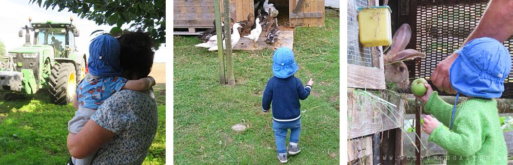 Tristan auf dem Bauernhof