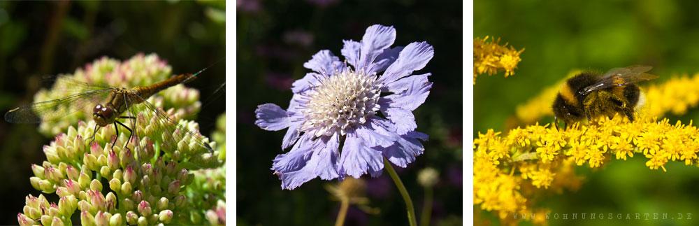 Blumen und Insekten im IGA Park