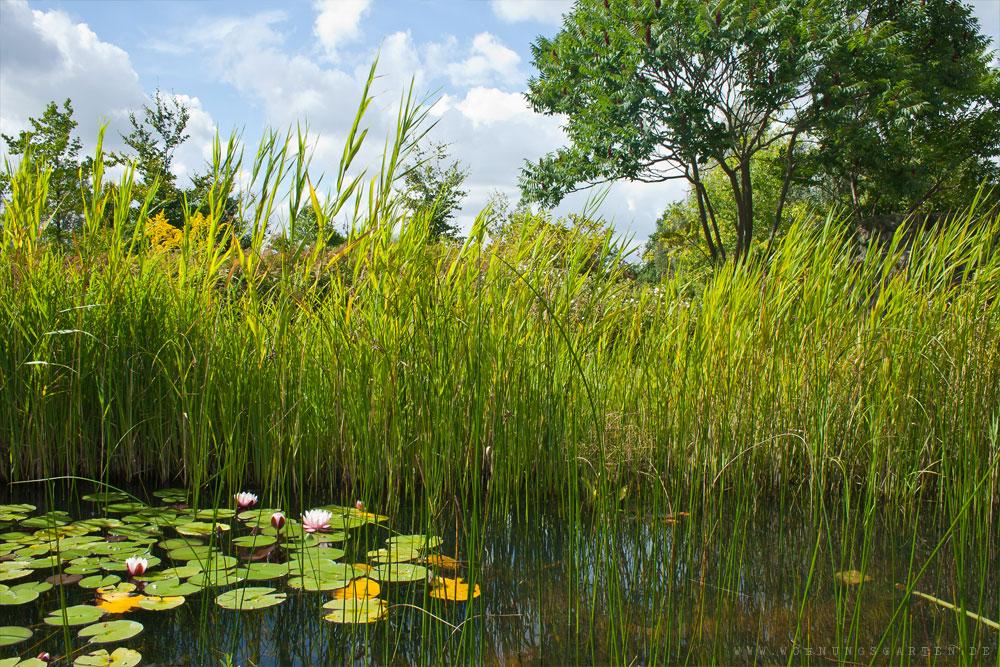 Teich im IGA Park