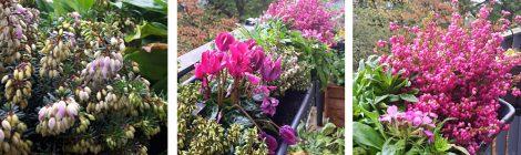 Neue Blumen auf dem Balkon