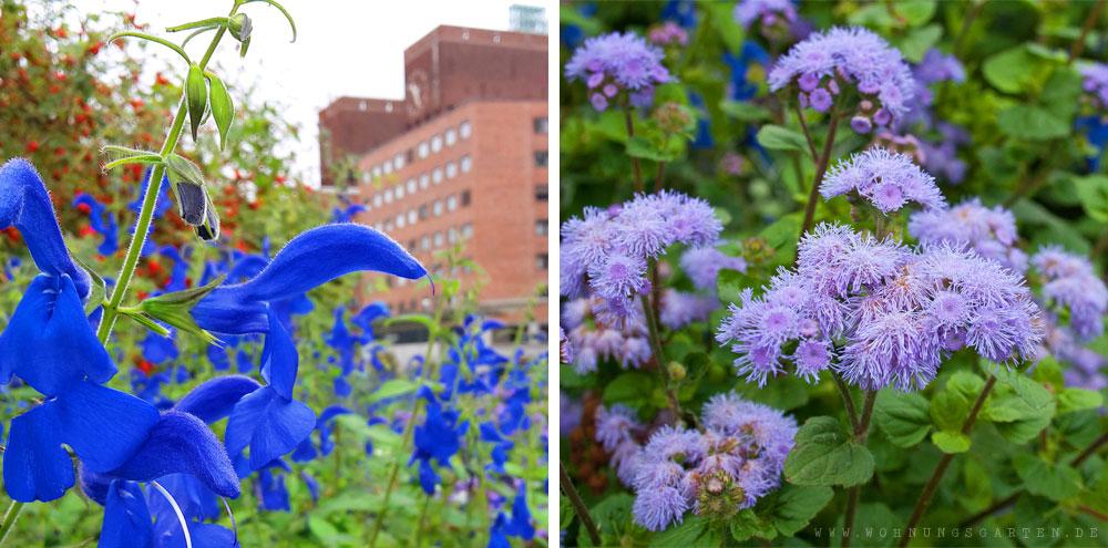 Blumen in Oslo und vor dem Rathaus