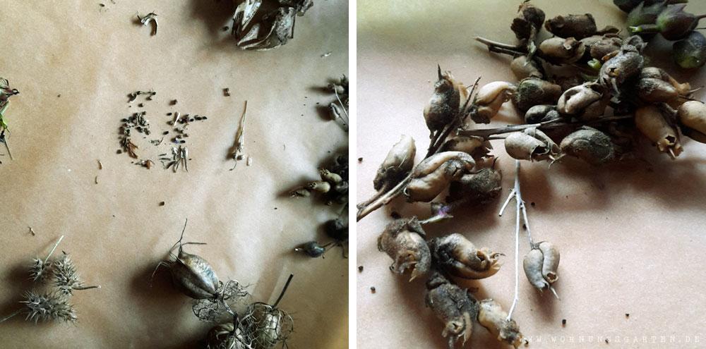 Verschiedene Samen beim Trocknen