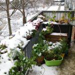 Der Balkongarten im Dezember