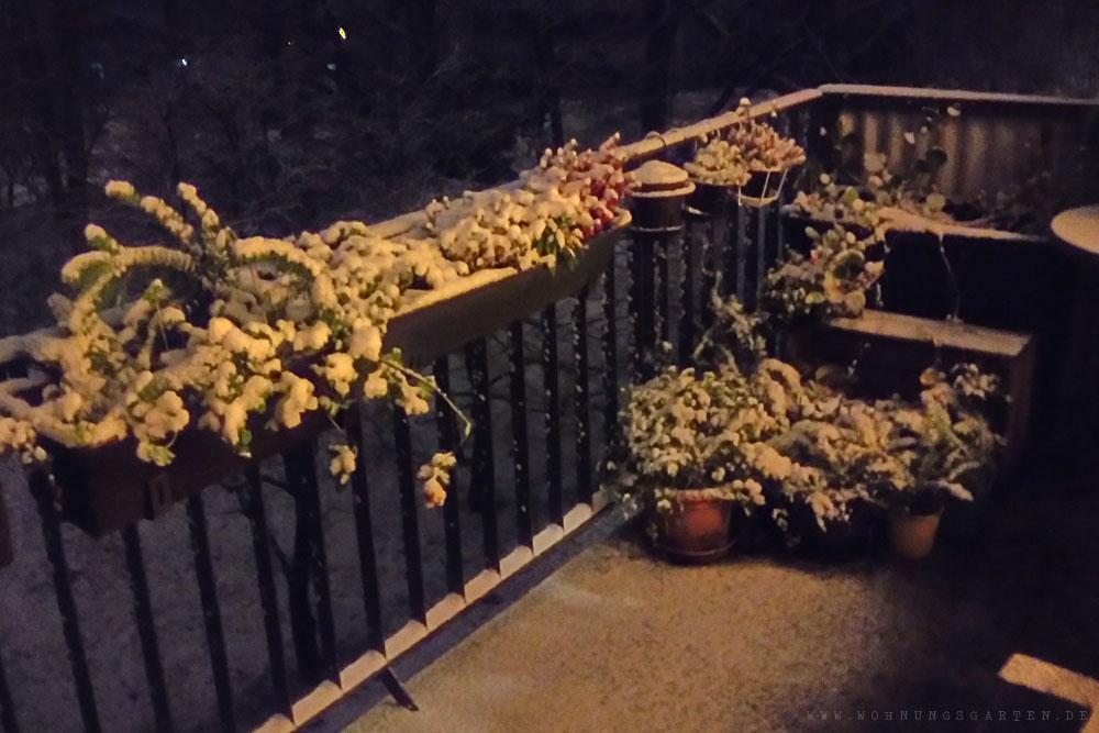 Schnee an Tristans Geburtstag