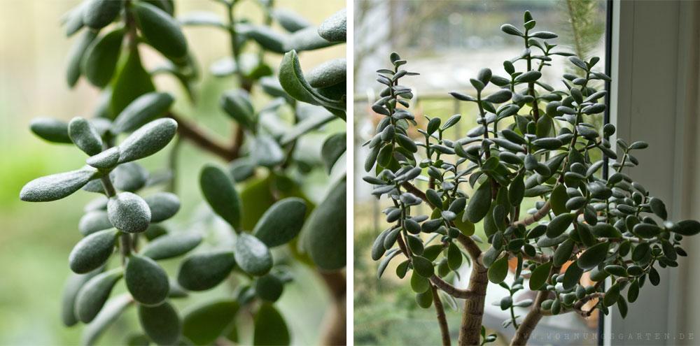 Giftig oder nicht wir sortieren zimmerpflanzen wohnungsgarten - Giftige zimmerpflanzen ...