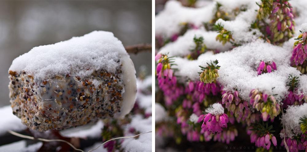 Schneebedeckte Erika und Vogelfutter