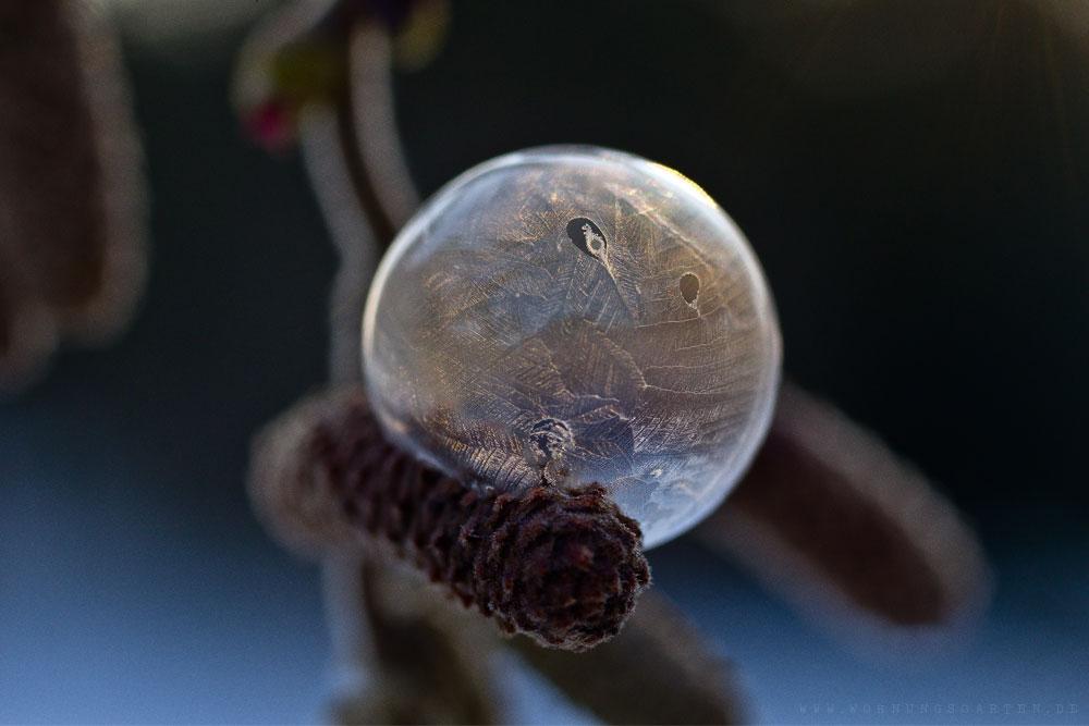 Seifenblase im Gegenlicht