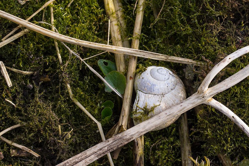 Schnecke versteckt sich im Moos