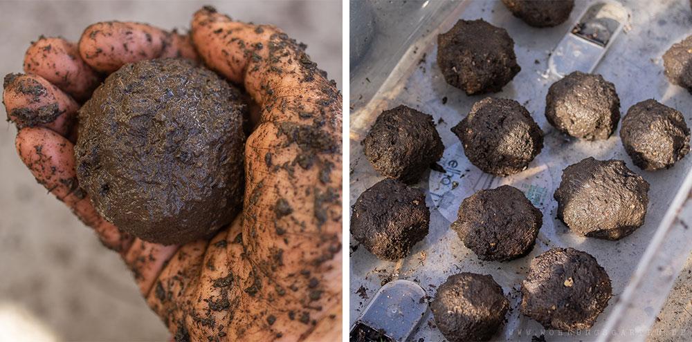 Samenbomben formen und zum Trocknen beiseite legen