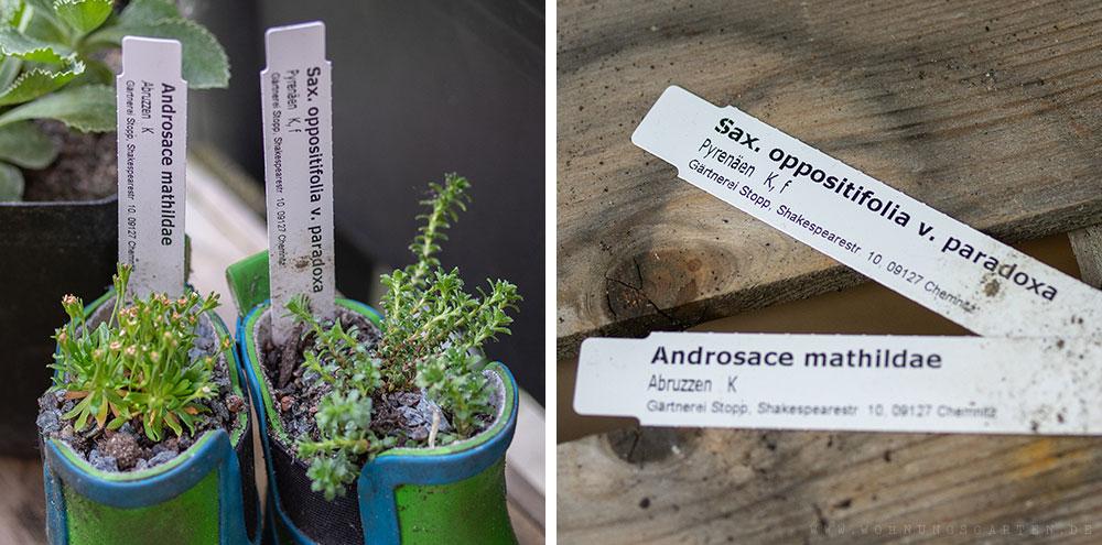 Verwendete Pflanzen mit Pflanzschildern