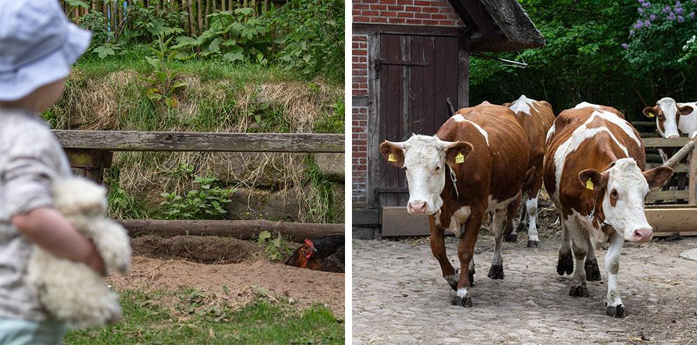 Tristan beobachtet ein Huhn und die Kühe werden rausgelassen