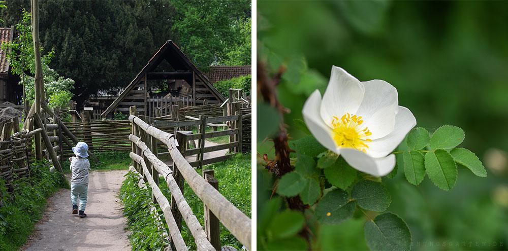 Tristan erkundet alleine das Museumsdorf und weiße Rose