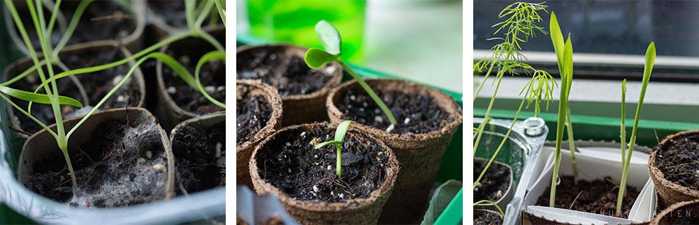 Kleine Pflanzen haben unsere Abwesenheit gut überstanden!