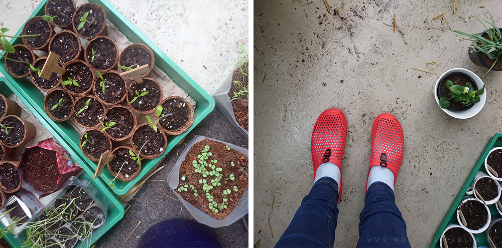 Neue Balkonschuhe und die kleinen Pflanzen schnuppern Frischluft