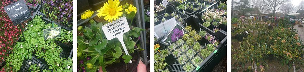 Pflanzenmarkt