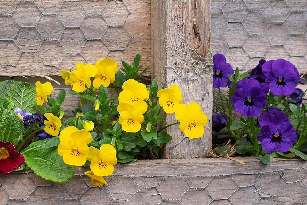 Blüten auf dem Balkongarten