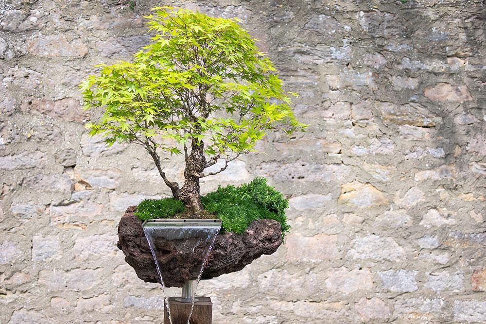 Eindrucksvoller Bonsai