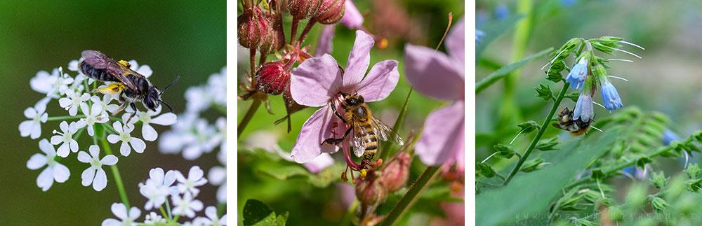 Bienen in den Blüten