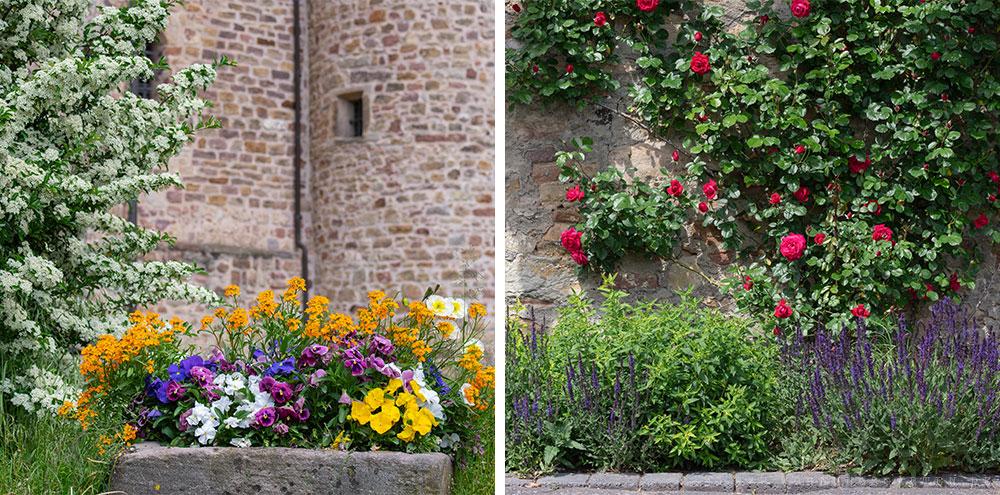 Blumen auf dem Weg zum Schlossgarten