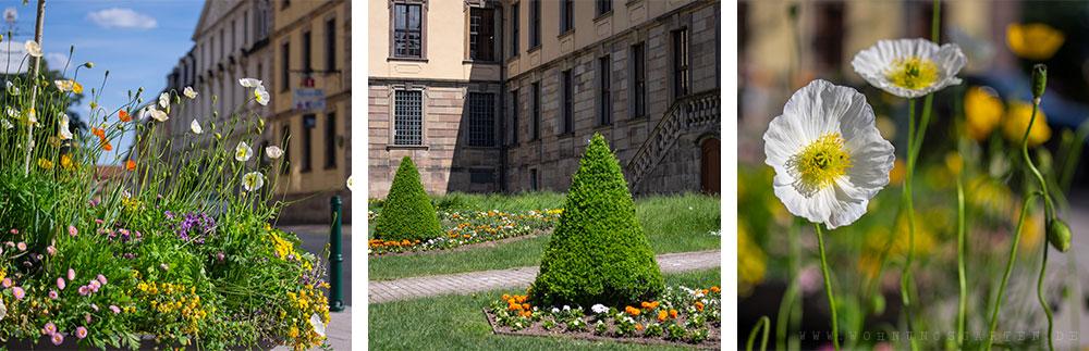 Blumen in Fulda