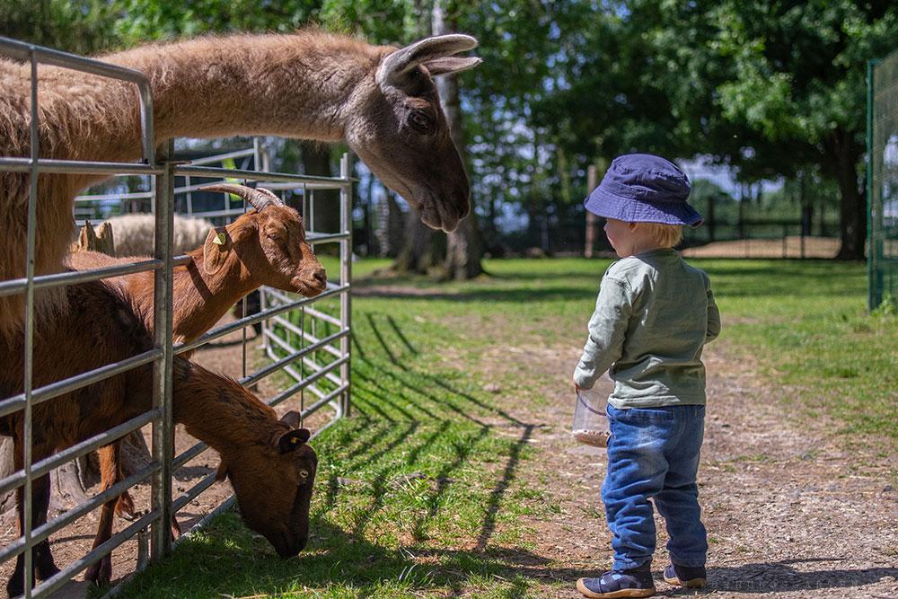 Tristan und die Tiere