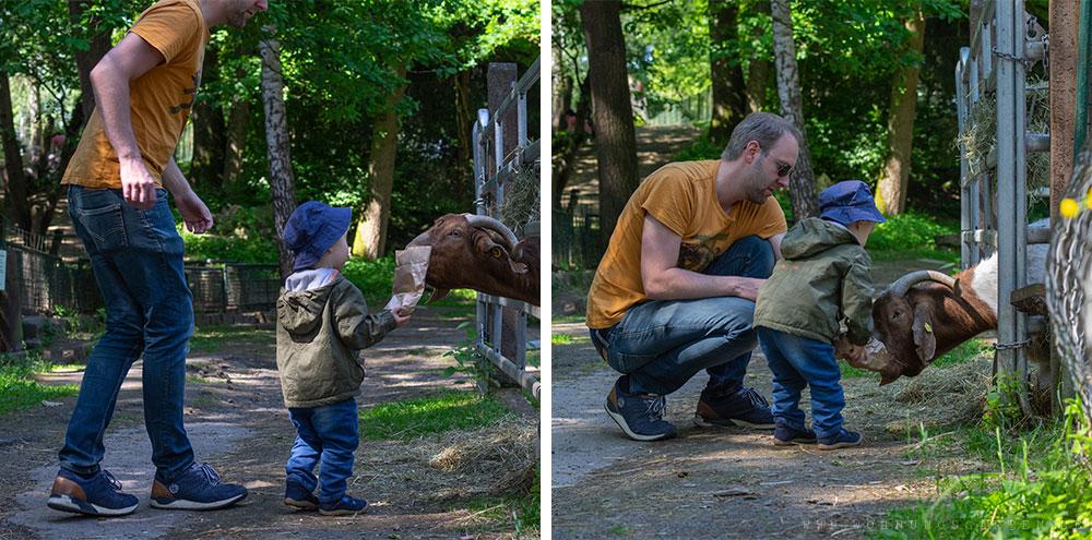 Tristan und Julian beim Ziegefüttern
