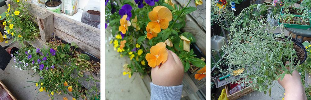 Blumen verblühen langsam