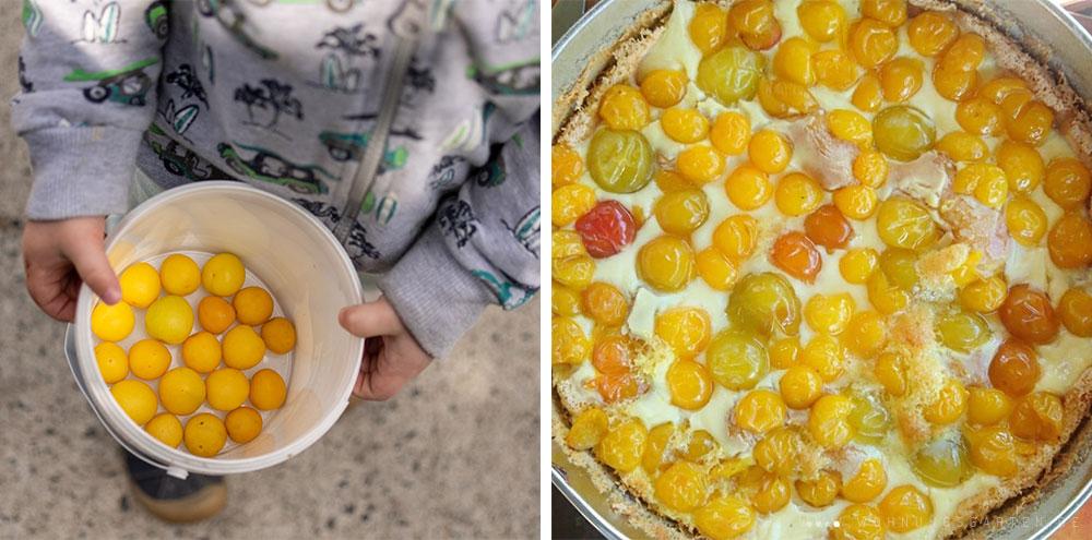 Tristans Pflaumen und der fertige Kuchen