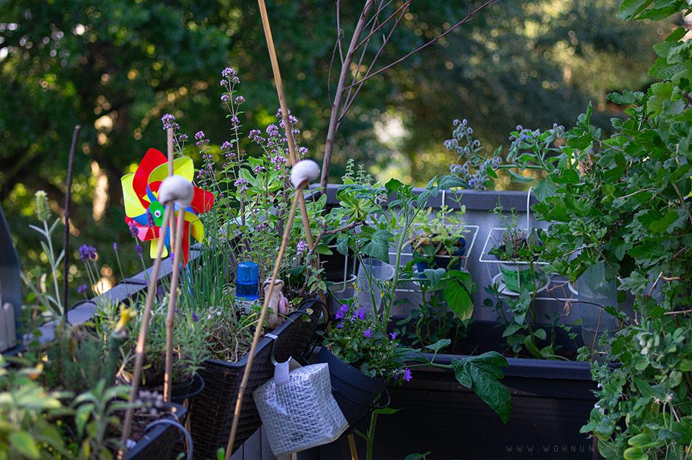 Wohnungsgarten Unser Kleiner Gartenblog Uber Die Pflanzen In Der
